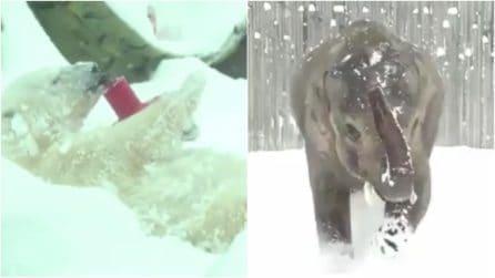 La neve coglie di sorpresa gli animali allo zoo: la loro reazione vi conquisterà