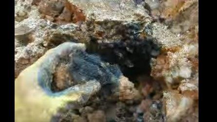 Scava in una zona ricca di minerali e trova il quarzo ametista