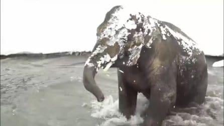 L'elefante è felice per l'arrivo della neve