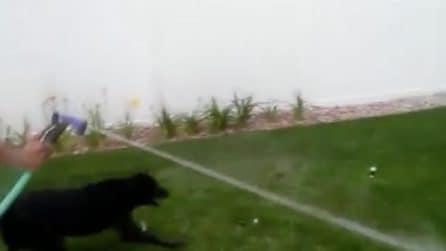 Vuole bere ma non ci riesce: il divertente video del cagnolino