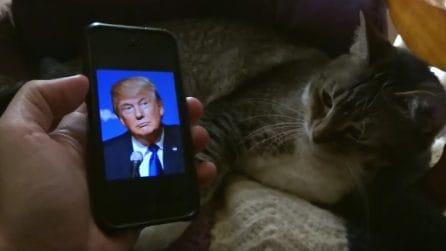 Mostra la foto di Trump: la reazione del suo gatto