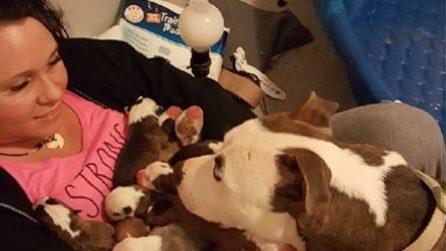 Mamma pitbull affida i suoi cuccioli alla donna che l'ha salvata: una scena emozionante