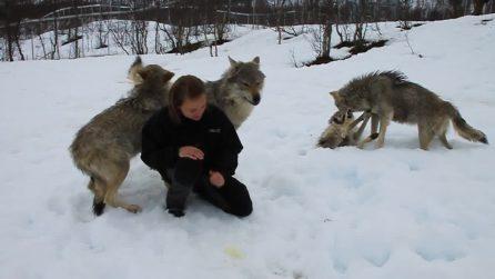 I lupi la rivedono dopo mesi e la loro è una tenerissima reazione