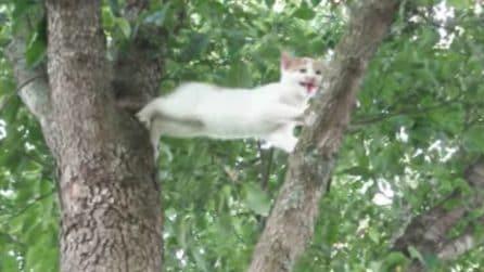 Mamma gatta corre in aiuto del cucciolo bloccato sull'albero: le immagini emozionanti