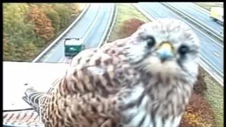 Accade ogni giorno e la telecamera lo riprende: guardate cosa fa il tenero animale