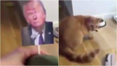 Mostra al suo gatto una foto di Trump: la reazione del micio è tutta da ridere