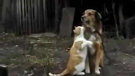 Vuole le coccole e lo abbraccia insistentemente: l'amore tra il gattino e il cane