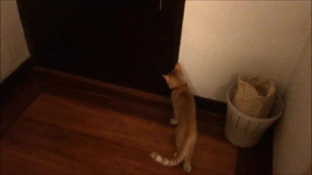 Aspetta impaziente davanti la porta: la reazione del gattino alla vista del cane è dolcissima