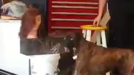 Il povero cane ha paura della testa del manichino: guardate la sua reazione improvvisa
