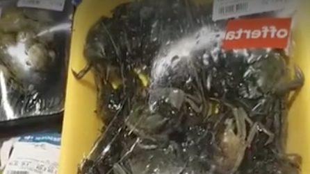 Licia Colò al supermercato denuncia: questi granchi sono stati confezionati vivi