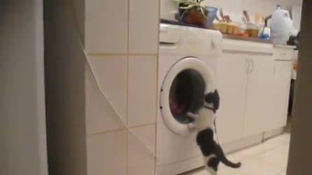"""Tenta di """"fermare"""" la lavatrice, la scena del gattino è molto divertente"""