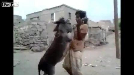 L'uomo balla con l'asinello: l'insolita scena è davvero comica
