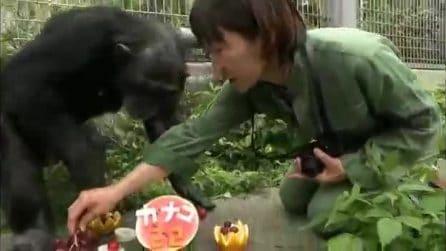 La commovente storia di Kanako, scimpanzé con la Sindrome di Down