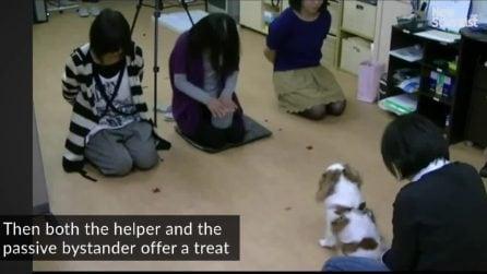I cani giudicano come ci comportiamo con le altre persone