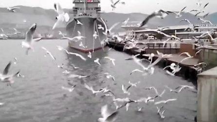"""""""L'invasione"""" dei gabbiani al porto: il curioso comportamento dei volatili"""