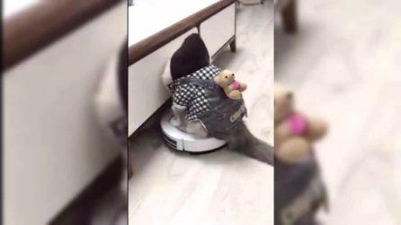 Il gatto si diverte sul robot lava-pavimenti, quello che succede è esilarante
