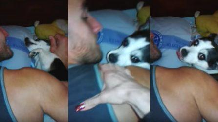 Cagnolino geloso del massaggio che la ragazza fa al fidanzato: la scena divertente