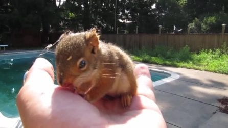 Lo scoiattolino non vuole stare solo e segue l'uomo: il piccolo animale è dolcissimo