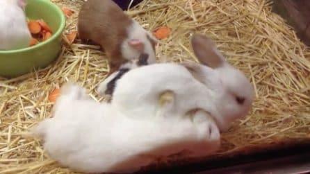 L'adorabile abbraccio del coniglietto: la scena più dolce che ci sia