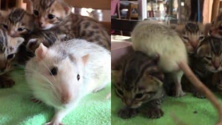 """I piccoli gattini in compagnia del topo: un'insolita """"amicizia"""""""