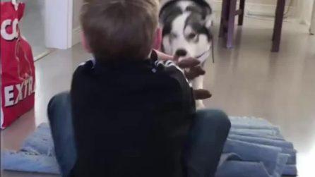 L'husky è il compagno di gioco più divertente