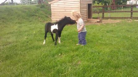 Il cavallo in miniatura gioca con le bambine: la tenera scena