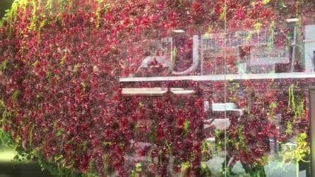 La vetrina del centro commerciale è davvero speciale: lo spettacolo dei fiori a Kyoto