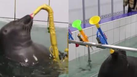 Sanno dipingere e suonare strumenti musicali: le foche sono incredibili