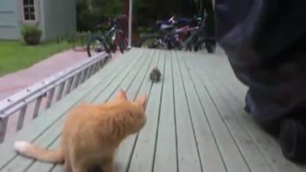 Lo scoiattolo si avvicina e ruba la nocciolina: il gatto lo guarda incuriosito