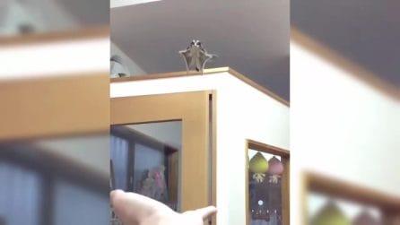 l piccolo animale si lancia nel vuoto e plana sulla mano del padrone: l'incredibile scena