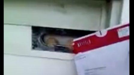 Il postino cerca di consegnare la lettera: l'insolita reazione del gatto è esilarante