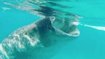 Nuota accanto allo squalo-balena: l'esperienza da brivido nelle Filippine