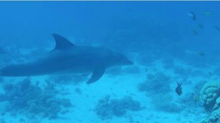 Sott'acqua in compagnia di un branco di delfini: immagini spettacolari