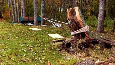Sradica un tronco dal terreno usando un trattore e un sistema di carrucole