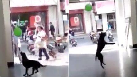 """Il cane trova un palloncino e """"impazzisce"""" di gioia: spettacolo in strada"""