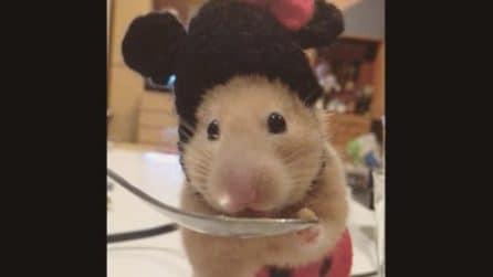 Il piccolo criceto vestito da Minnie mangia teneramente dal cucchiaio: la scena adorabile