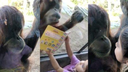 La bambina legge il libro al suo amico speciale: l'orangotango la guarda incuriosito