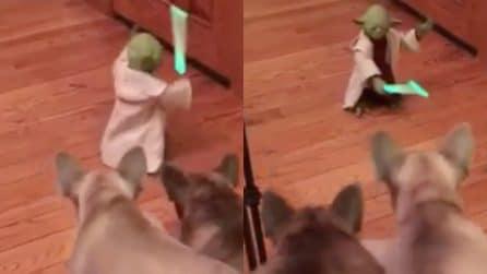 I cagnolini abbaiano contro il pupazzo di Yoda: la scena è davvero divertente