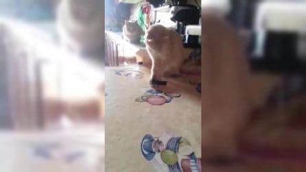 """""""Mi passi lo smalto?"""": ecco cosa fa la tenera gattina"""