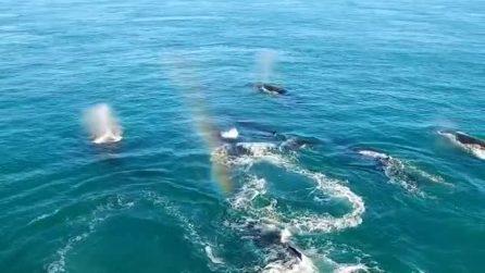"""Le balene """"magiche"""" spruzzano arcobaleni nell'oceano: lo spettacolo è magnifico"""