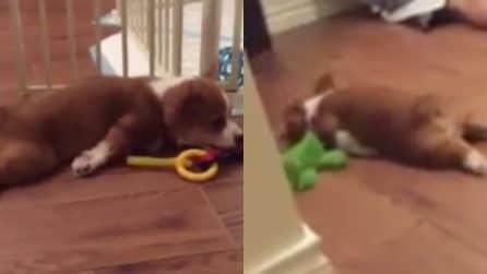Il gioco è davvero stancante e il cucciolo reagisce così: è esilarante
