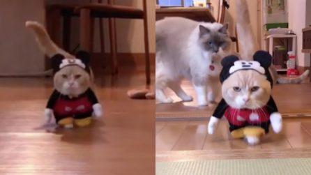 Un gatto vestito da Topolino: la sua espressione è tutta da ridere