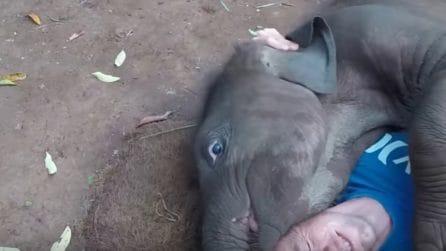 Il piccolo elefante vuole giocare: quello che fa è davvero dolcissimo