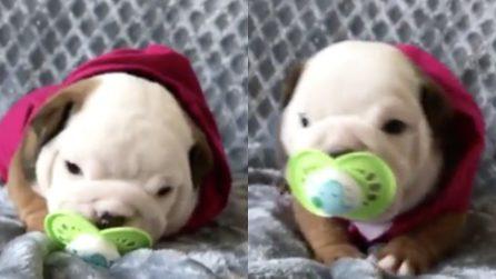 Il piccolo cagnolino ha qualcosa in bocca: non crederete ai vostri occhi
