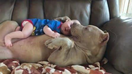 Il bimbo è sdraiato sulla pancia del suo enorme cane: la tenerezza dei due è infinita