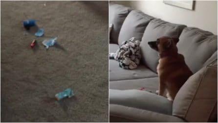 """Torna a casa e trova il rossetto mangiucchiato: il cane """"colpevole"""" ha una reazione inaspettata"""