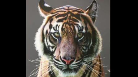 All'apparenza sembra la foto di una bellissima tigre: ciò che nasconde vi lascerà a bocca aperta