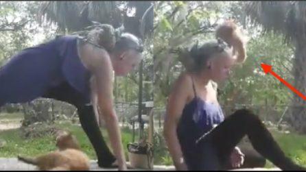 La ragazza fa yoga in compagnia del suo gatto ma qualcosa va storto