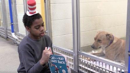 Leggono le fiabe agli ospiti del canile: l'iniziativa animalista dei bambini