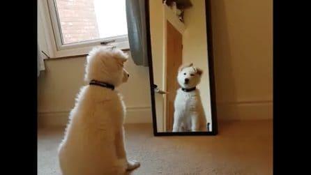 Il cucciolo si vede per la prima volta nello specchio: la sua reazione è esilarante
